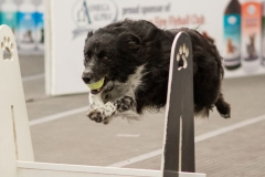 Flyball - Vibe