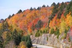 Roads of Algonquin