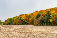 Foxboro Fall Colours