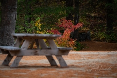 Picnic in the Fall