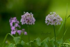 Purpler Flowers