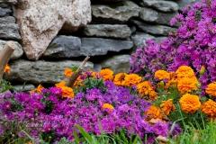 Vibrant Garden Flowers
