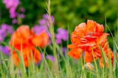 Vibrant Colors in the Grass