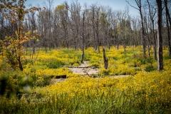 Slaab Creek Burmarigolds