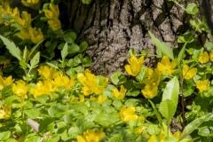 Pretty Yellow Tree Base