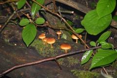 Neon Orange Small Mushrooms