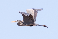 Perseverance - The Symbol of a Flying Heron