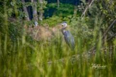 Hiding in the Grasses