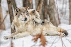 Breeding Lovers