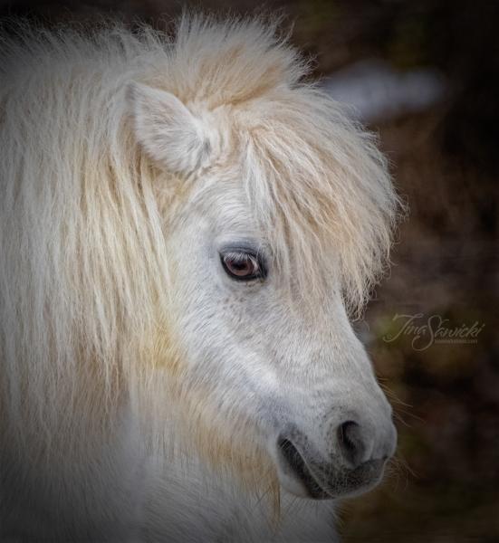 Profile Pony