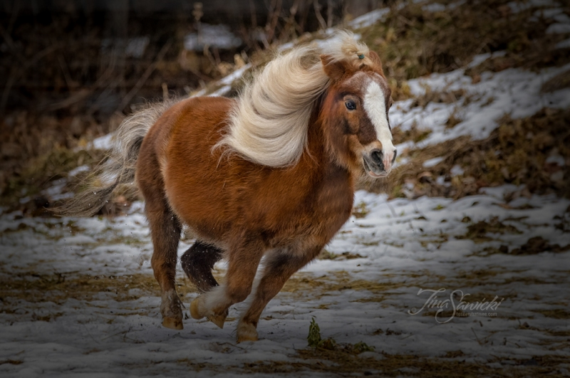 Running Pony