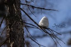 Snow Hive