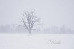 Anchor Tree