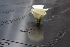 911 Memorial Birthday Rose