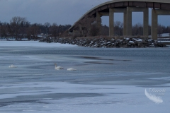 Bridge to Belleville