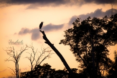 Heron in the Sunset