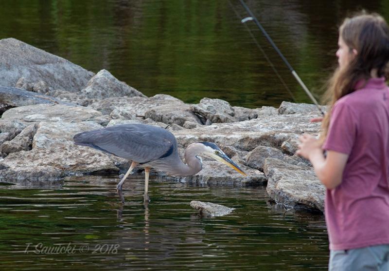 IMG_1147_fishingfriendsfav