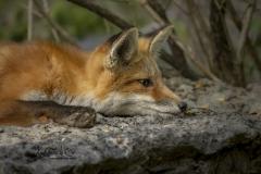 Flat Fox Kit