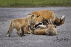 Family Pile Up