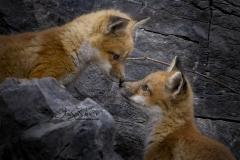 Nose Kisses