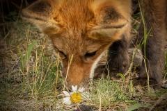 Sniffing Kit
