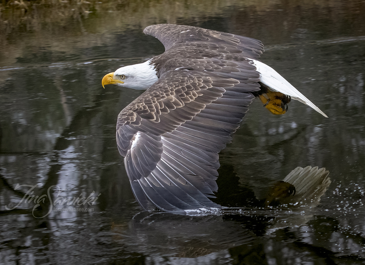 071A9620-eagle-site