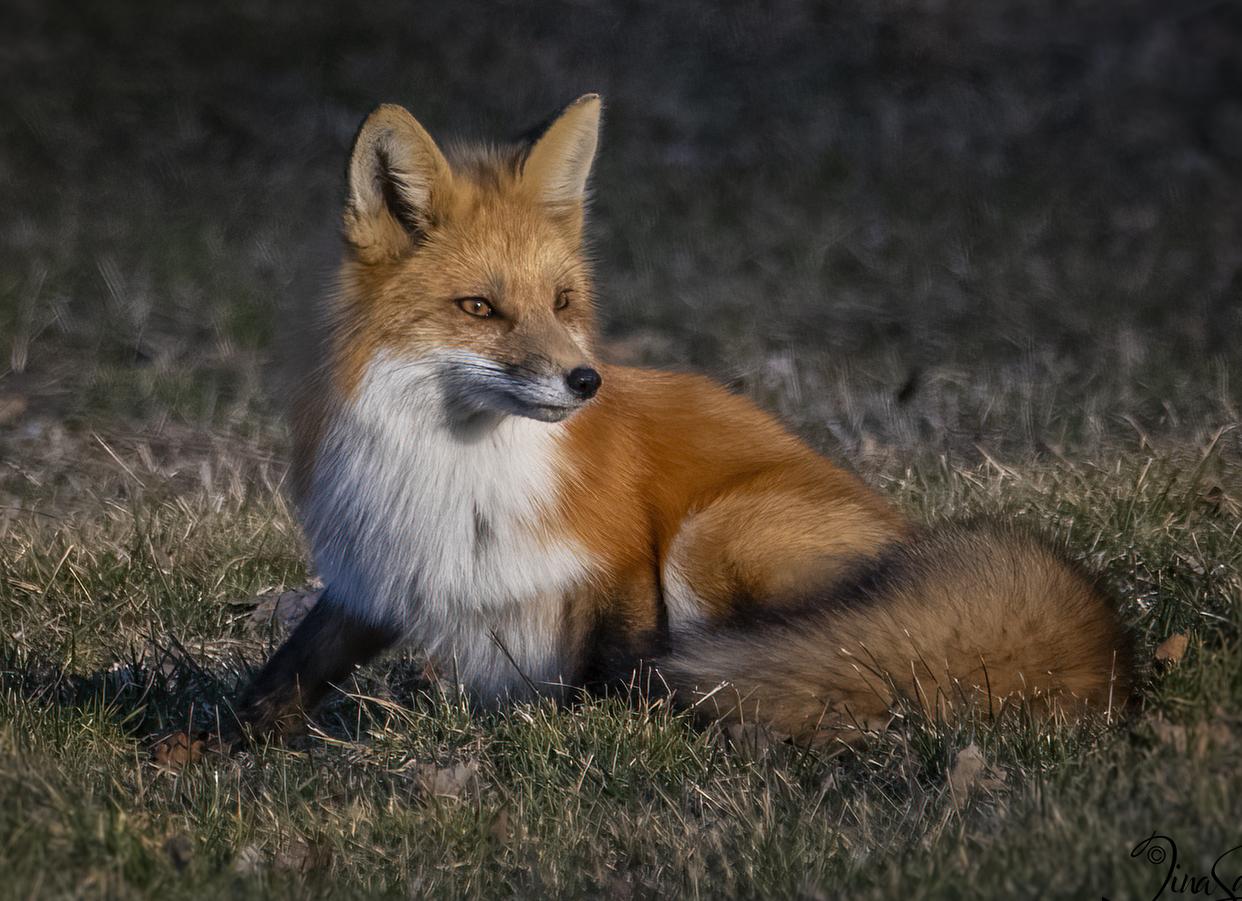 071A9620-fox-site